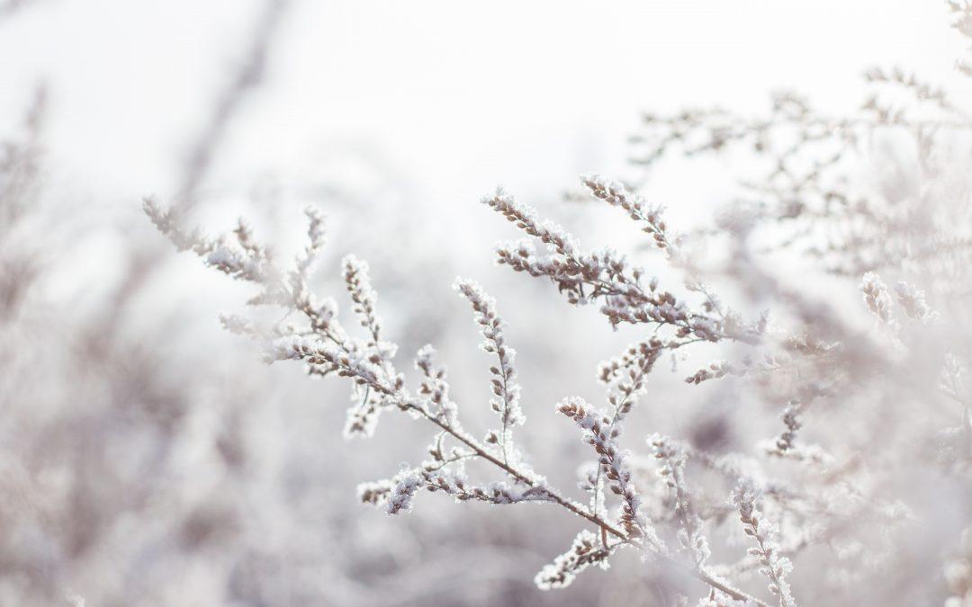 Talviloma viikolla 10